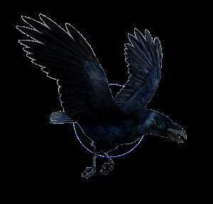 Raven-Flying-416770